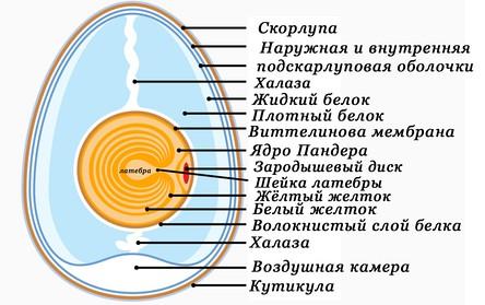 Птицы - Википедия Переиздание